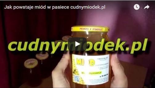 Jak powstaje miód w pasiece cudnymiodek.pl